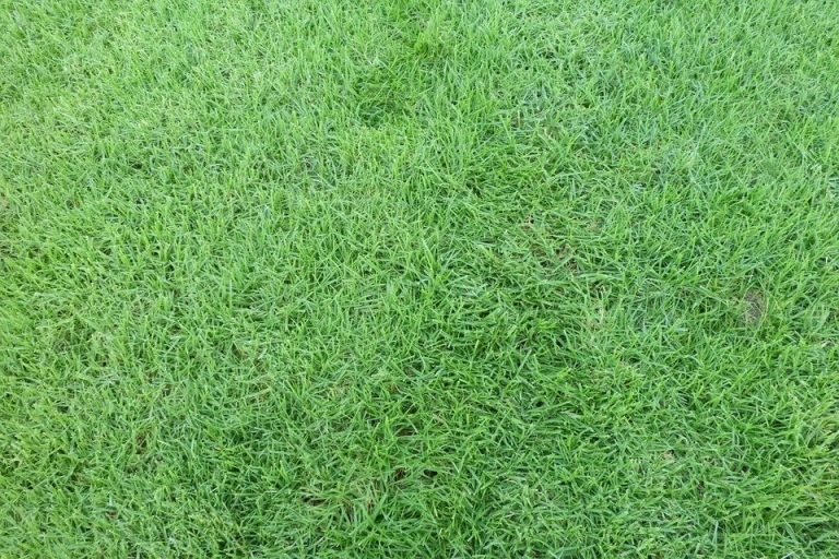 Excellent picture of green lawn turf
